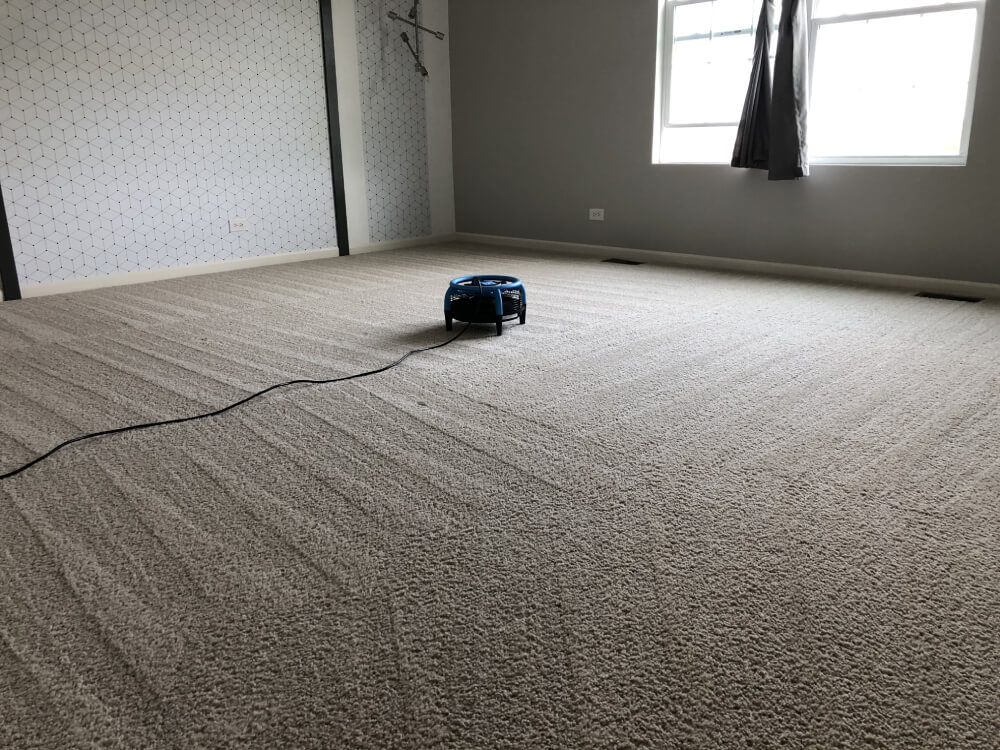 Turbo Drying Carpet Cleaning Elgin
