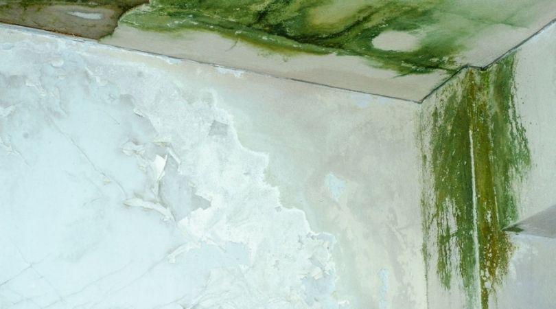 Mold Remediation Company Elgin