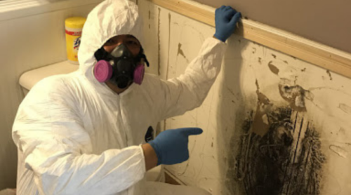 professional mold removal Elgin
