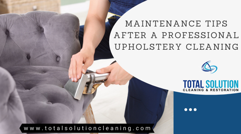 Professional Upholstery Cleaning Elgin