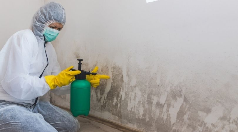 Certified Mold Remediation Contractor Elgin