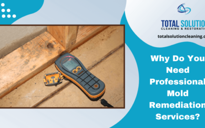 Why Do You Need Professional Mold Remediation Services?