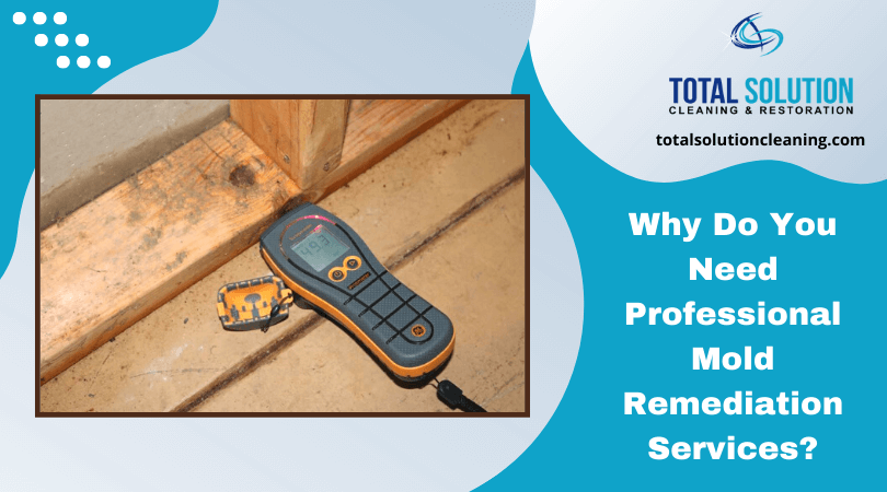 Why Do You Need Professional Mold Remediation Services