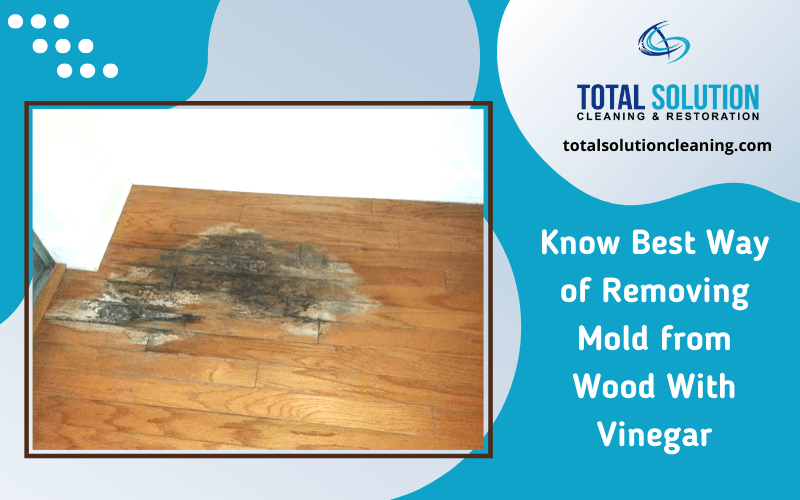 Know Best Way of Removing Mold from Wood With Vinegar