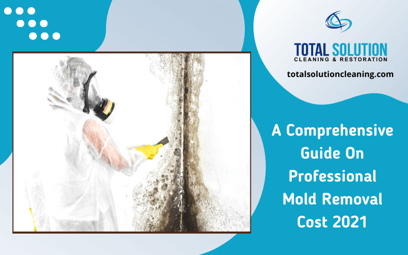 Professional Mold Removal Cost Elgin