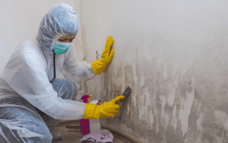Expert Mold Remediation Service Elgin