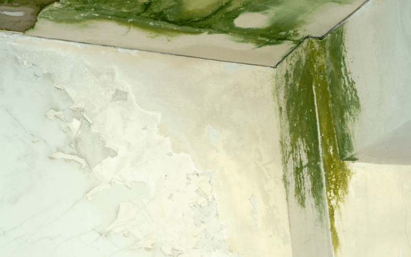 Mold Removal Cost Elgin